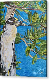Yellow Crested Night Heron Painting Acrylic Print by Judy Via-Wolff