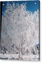 Acrylic Print featuring the photograph -32 Degrees by Shawn Hughes