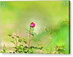 A Rose  Acrylic Print by Gib LaStrapes