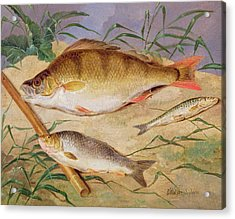 An Angler's Catch Of Coarse Fish Acrylic Print by D Wolstenholme