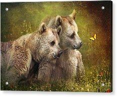 Bear Hugs Acrylic Print by Trudi Simmonds