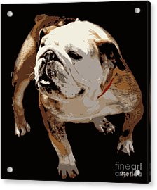 Acrylic Print featuring the photograph  Bulldog  by Mindy Bench