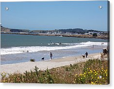 California Beach Acrylic Print by Carolyn Donnell