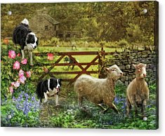 Collecting The Strays Acrylic Print by Trudi Simmonds