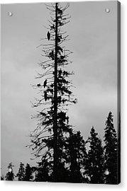 Eagle Silhouette - Bw Acrylic Print