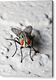 Fly On The Wall Acrylic Print by Nick  Shirghio