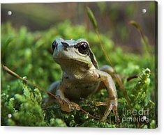 Frog Acrylic Print by Odon Czintos