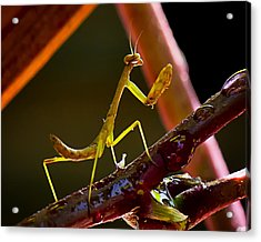 Guardian Of The Rose  Acrylic Print by Michael Putnam