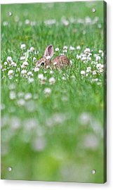 Acrylic Print featuring the photograph  I See You by Scott Holmes