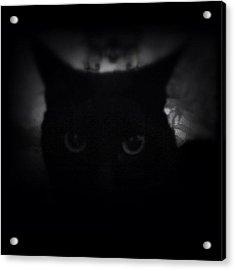 ♞ #ig_m || Luna ||| Acrylic Print by M M