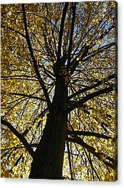 Ithaca New York Fine Art Print Acrylic Print by Ian Stevenson