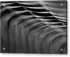 Light Web Acrylic Print