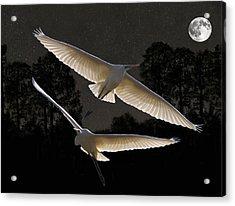 Majestic Great Egrets  Acrylic Print by Eric Kempson