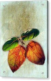 Memory Of Leaves Acrylic Print by Judi Bagwell