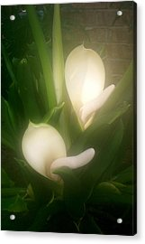 Mystery Bulb Blooming Acrylic Print