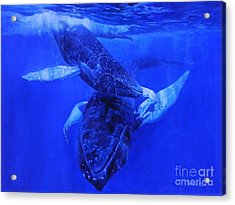 Playful Humpbacks Acrylic Print