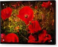 Acrylic Print featuring the photograph  Poppies by Beverly Cash