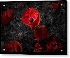 Acrylic Print featuring the photograph  Poppy Red by Beverly Cash