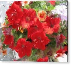 Red Petunia Acrylic Print