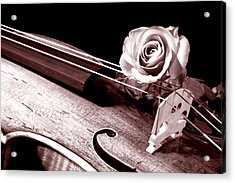 Rose Violin Viola Acrylic Print