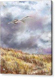 Seagull Flying Over Dunes Acrylic Print by Jack Skinner