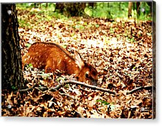 Acrylic Print featuring the photograph  Sweet Baby Elk by Peggy Franz