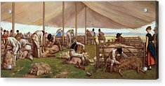 The Sheep Shearing Match Acrylic Print by Eyre Crowe