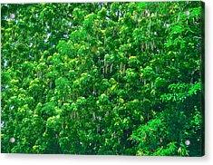 Tibit Tree Acrylic Print