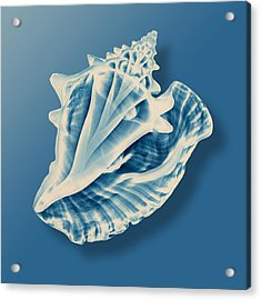 X-ray Of A Conch Shell Acrylic Print