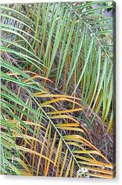 014 Palm Leaves Acrylic Print by Carol McKenzie