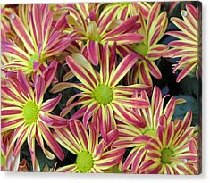 015 Pink And Yellow Flowers Acrylic Print by Carol McKenzie