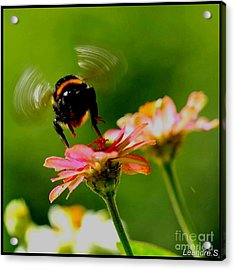 A Bee Acrylic Print by Sylvie Leandre