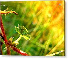 Acrylic Print featuring the photograph A New Morning by Debbie Portwood