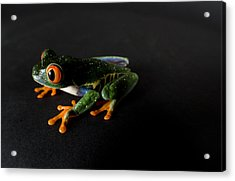 A Red-eyed Tree Frog Agalychnis Acrylic Print by Joel Sartore