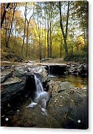 A Woodland View At Long Branch Nature Acrylic Print by Rex A. Stucky