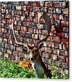 Against The Wall Acrylic Print by Isabella F Abbie Shores FRSA
