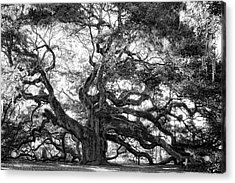 Acrylic Print featuring the photograph Angel Oak by Lynne Jenkins