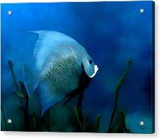 Acrylic Print featuring the digital art Angelfish by John Pangia