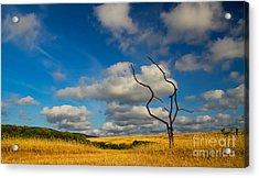 Artificial Nature Acrylic Print by Slavyan Kostov