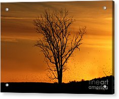 At End Of Day II Acrylic Print by Rhonda Strickland