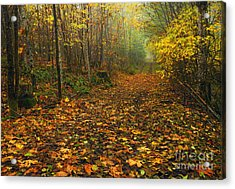 Autumn Lane Acrylic Print by Mike  Dawson