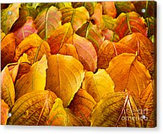 Autumn Leaves  Acrylic Print by Elena Elisseeva