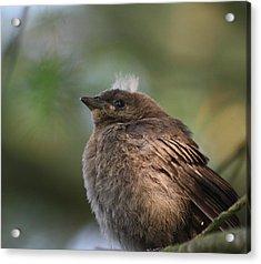 Baby Bird Acrylic Print by Cathie Douglas