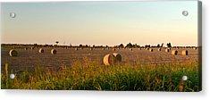 Bales In Peanut Field 2 Acrylic Print by Douglas Barnett