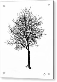 Bare Winter Tree Acrylic Print
