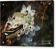 Acrylic Print featuring the photograph Beautiful Nature 2 by Jasna Gopic
