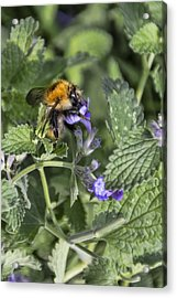Acrylic Print featuring the photograph Bee by David Gleeson