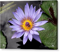 Acrylic Print featuring the photograph Bee With Me by Ayasha Loya