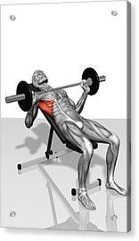 Bench Press Incline (part 2 Of 2) Acrylic Print by MedicalRF.com