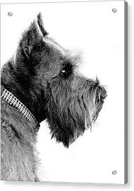 Benny Acrylic Print by Mickey Harkins